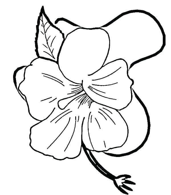 600x682 hibiscus coloring pages hibiscus flower hibiscus flower drawing