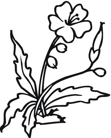 385x480 Hibiscus Flower Coloring Pages Elegant The Best Free Blooming