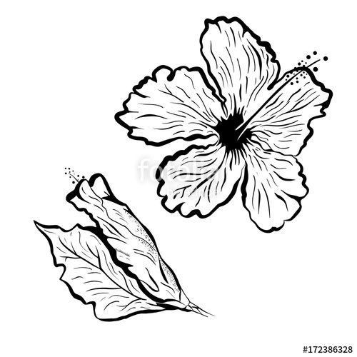 500x500 Hibiscus Flower In Tattoo Style Black And White, Graphic Tropical
