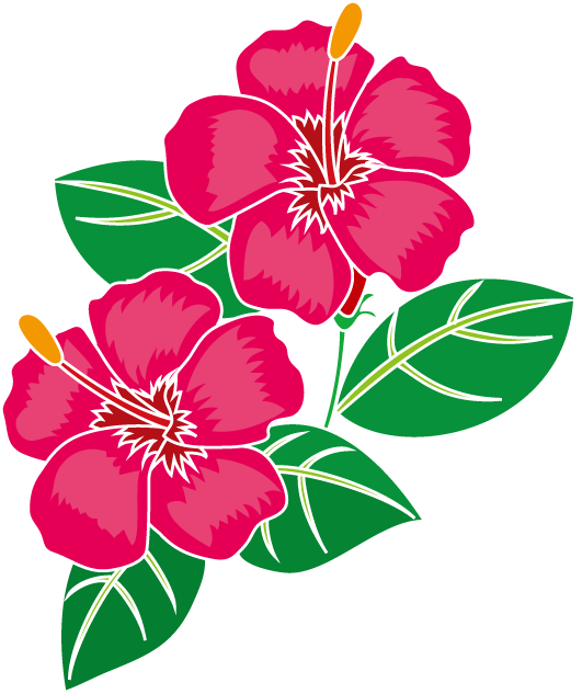 531x633 Petal Drawing Hibiscus Transparent Png Clipart Free Download