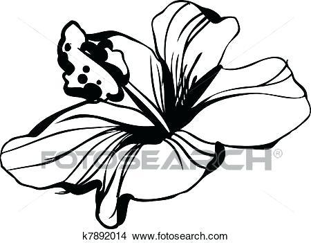 450x351 Hibiscus Flower Sketch