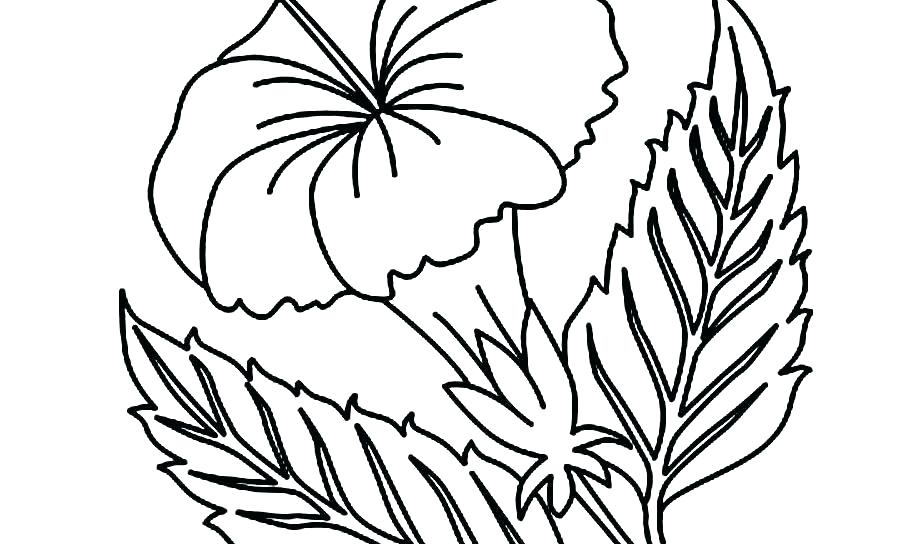 900x544 Coloring Pages For Adults Pdf Printable Unicorn Online Hibiscus