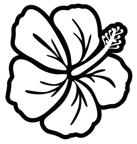 447x469 how to draw a hibiscus flower tutorial drawn hibiscus flower draw