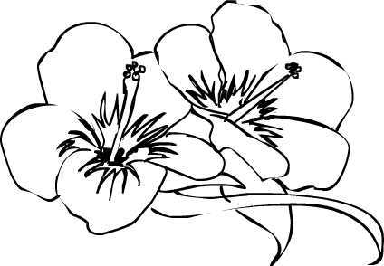 Hibiscus Flower Line Drawing