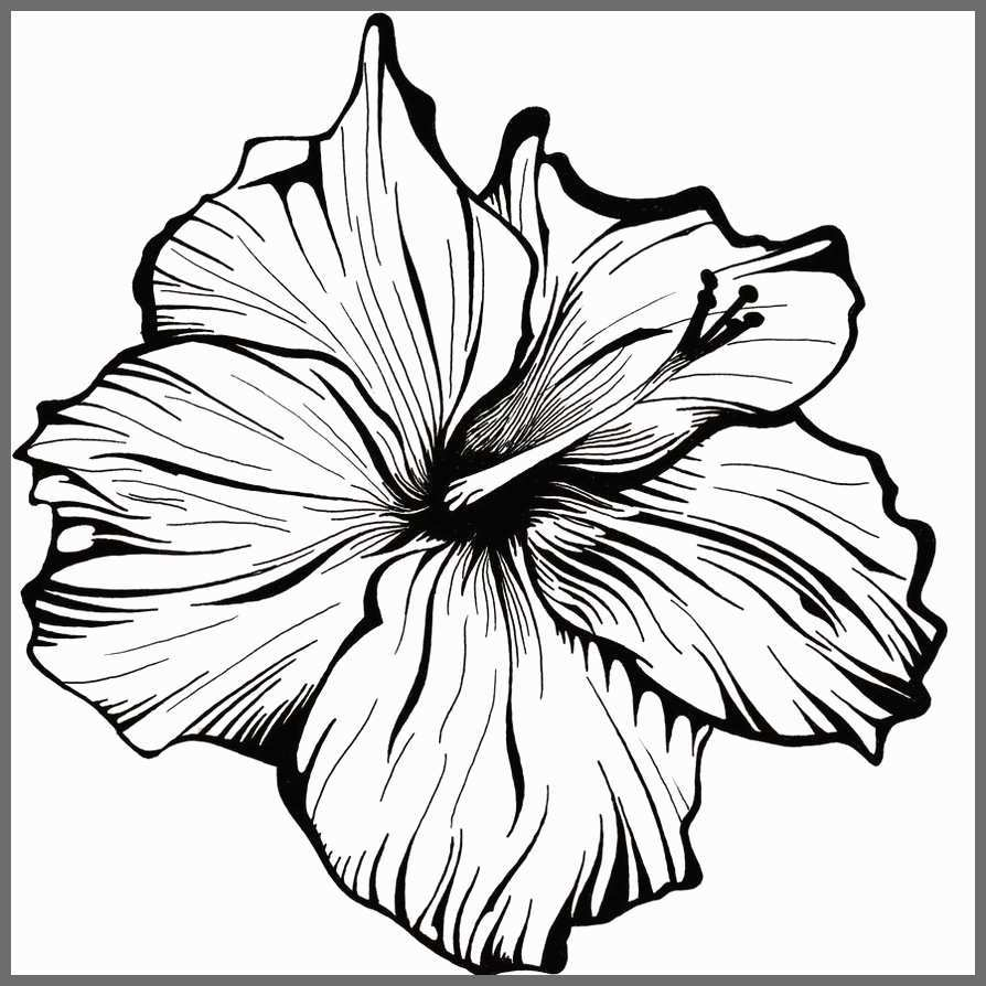 Flower Sketch Art Images