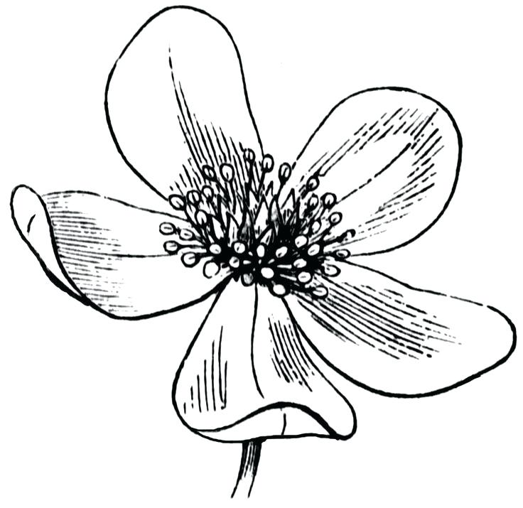 736x715 Flower Drawing Clipart Flower Drawings For Kids Library Flower