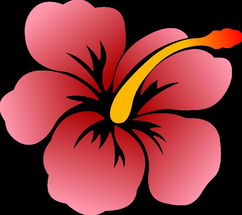 843x750 Flower Shoeblackplant Hawaiian Hibiscus Drawing Swamp Rose Mallow