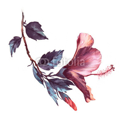 392x400 Hand Drawn Watercolor Floral Illustration Of The Tender White