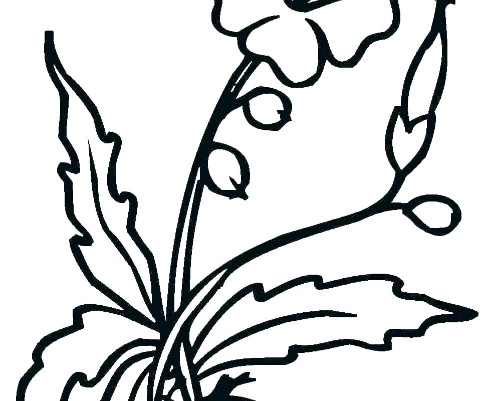 962x800 Hibiscus Flower Coloring Pages