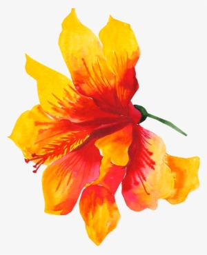 300x370 hibiscus flower png, transparent hibiscus flower png image free