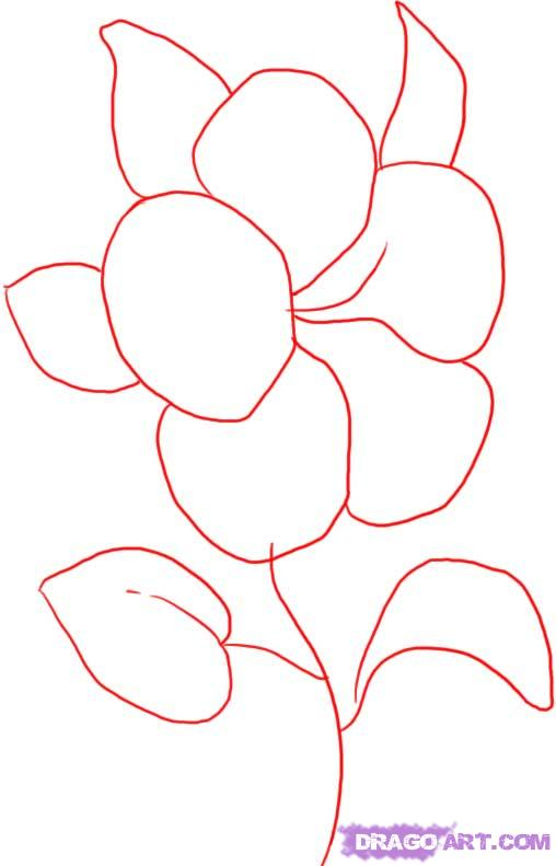 508x791 How To Draw A Easy Hibiscus Flower