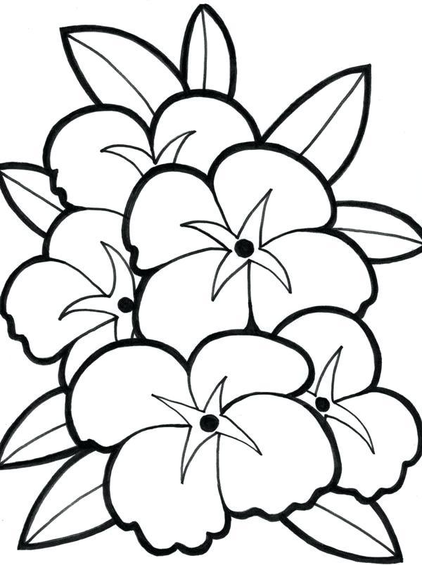 600x803 Hibiscus Coloring