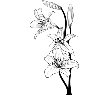 380x400 Hibiscus Flowers Drawing Beautiful Flower Arrangements