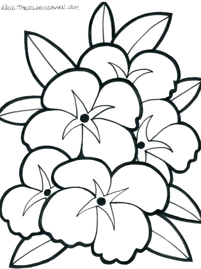 640x856 Coloring Pages Plant Coloring Pages Free Flowers