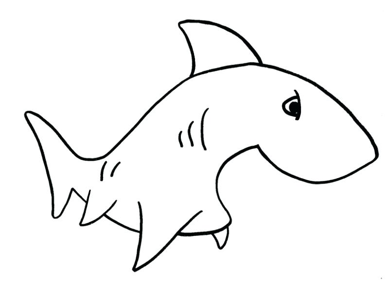 800x581 Easy Sharks To Draw Easy To Draw Sharks Drawings Drawing Ideas