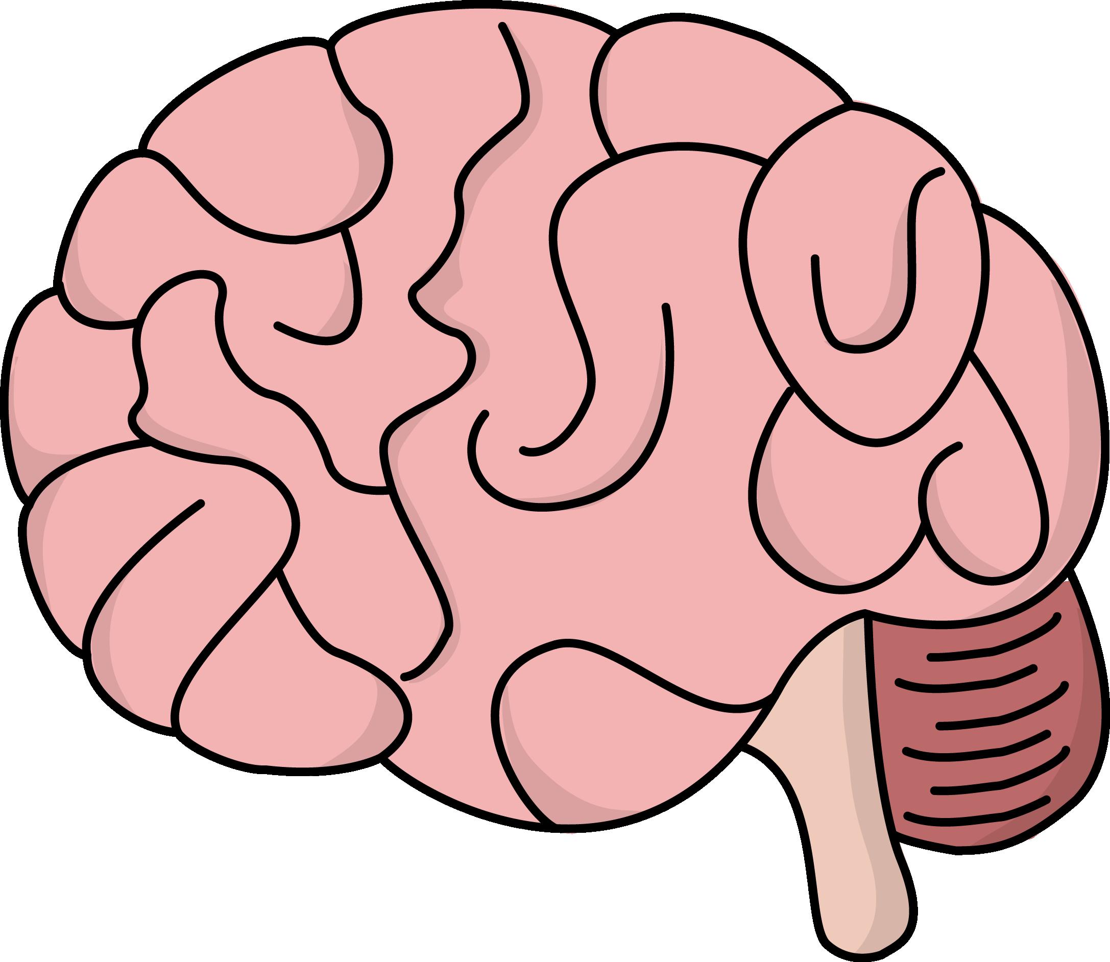 2174x1884 Hd Human Brain At Getdrawings
