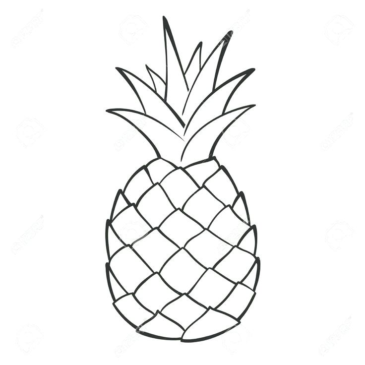 736x736 Pineapple Drawings Pineapple Drawing Step