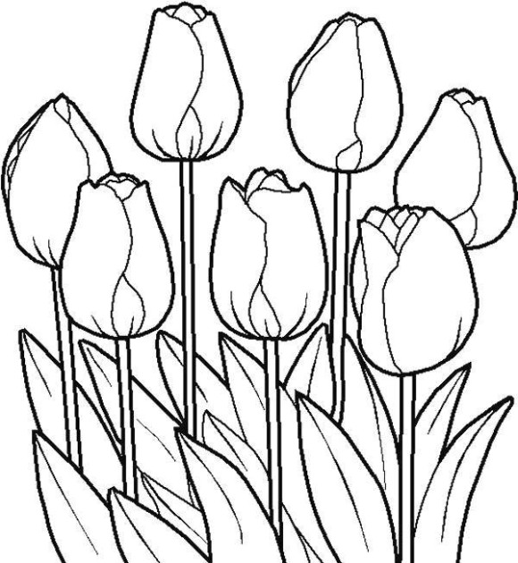 580x630 Tulip Drawings Free Collection Of Tulip Flower Drawing High