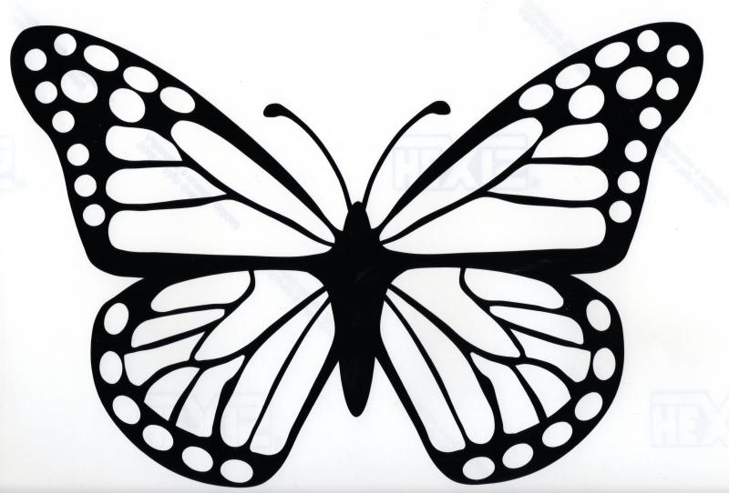 800x542 Exclusive Big Pictures Of Butterflies Butterfly Car Sticker Hippy