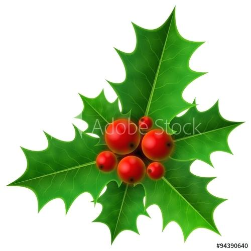 500x500 christmas holly berry holly berry isolated on white holly fruits