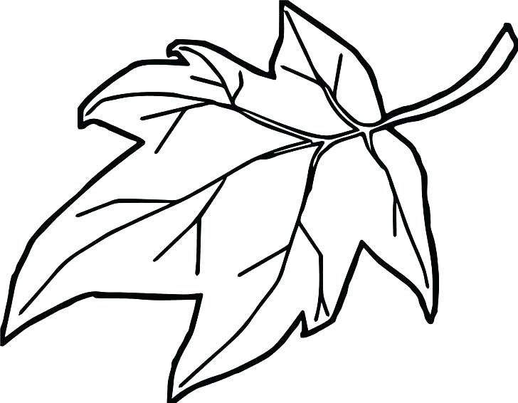 728x566 mistletoe coloring pages printable online holly holly holly leaves
