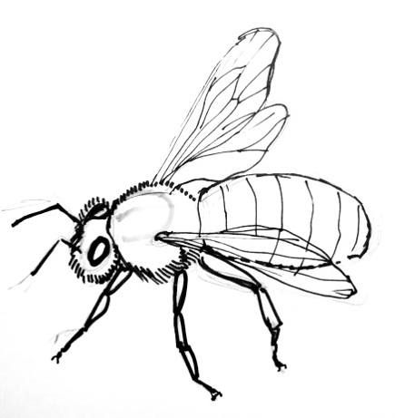 435x461 bee drawing bee line art images in bee drawing, honey bee