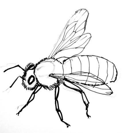 435x461 bee drawing bee line art images in bee drawing, honey bee