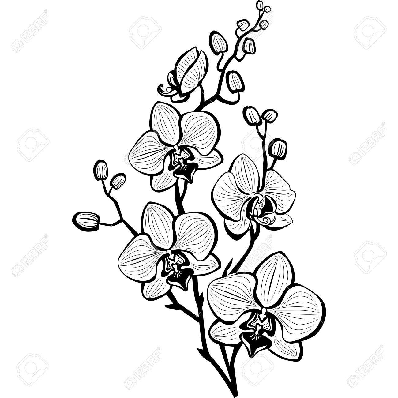Hop Flower Drawing