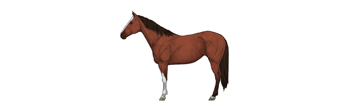 700x221 How To Draw Horses Step