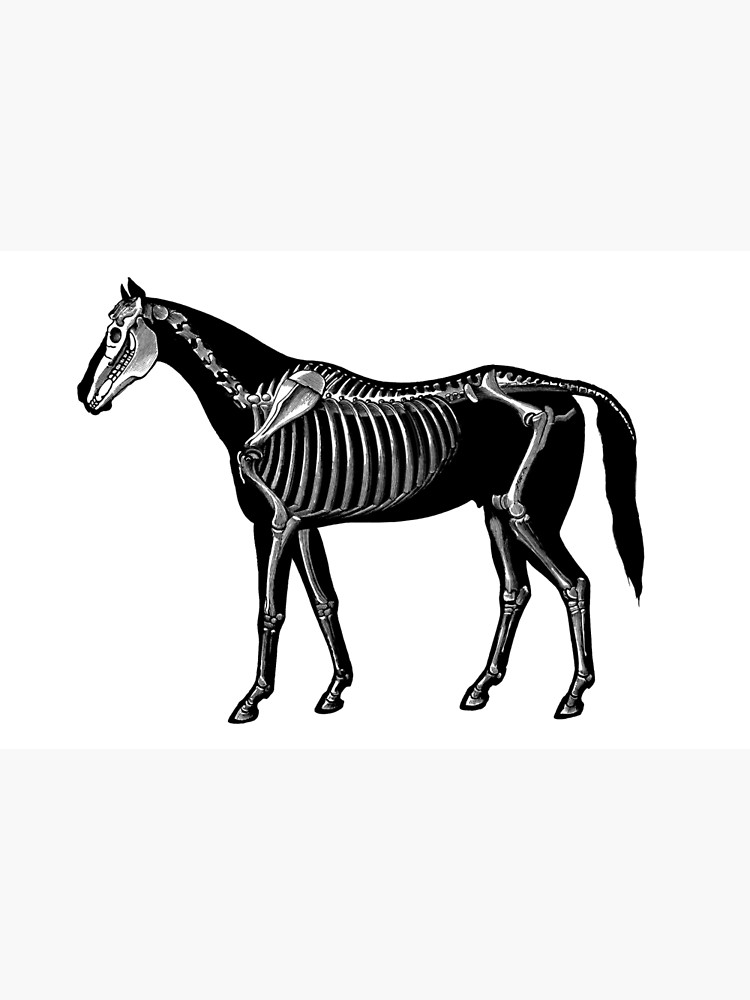 750x1000 Horse Silhouette With Skeleton Photographic Print
