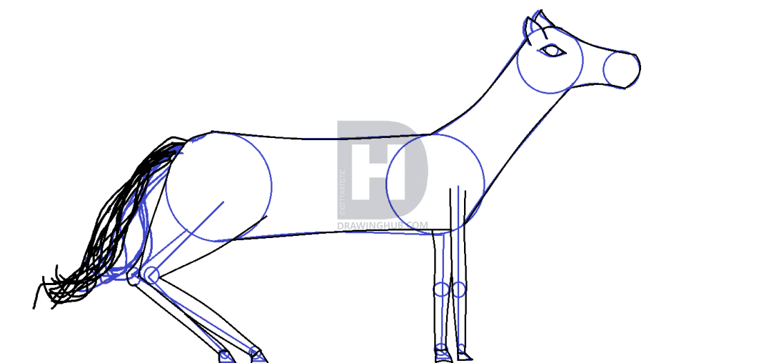 1080x508 How To Draw Horses, Step