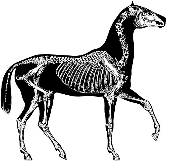 550x517 Black Horse With Skeleton Posters