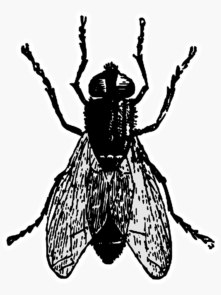 750x1000 bug, house fly, blue bottle, the fly, fly, house fly, insect
