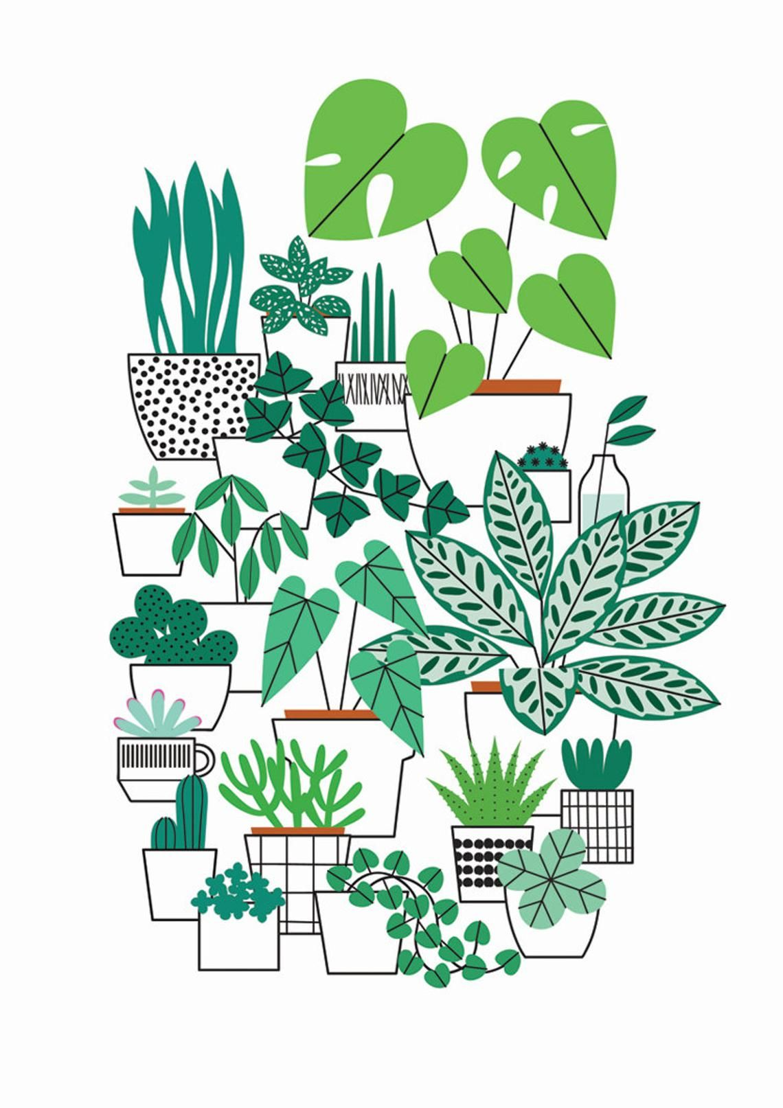 House Plant Drawing