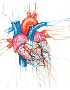 232x300 Huge Collection Of 'heart Drawing Anatomy' Download More Than