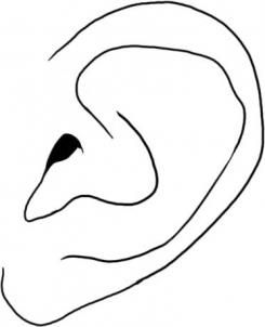 245x302 Huge Collection Of 'human Ear Drawing' Download More Than