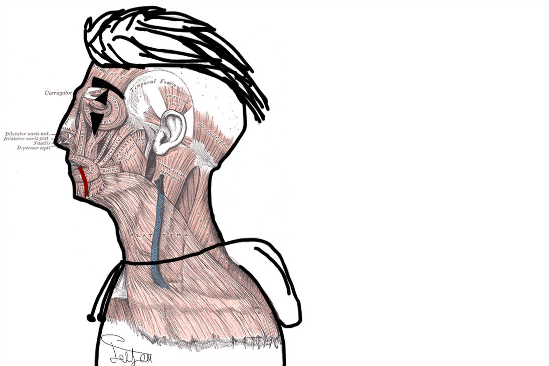 1095x730 Human Anatomy