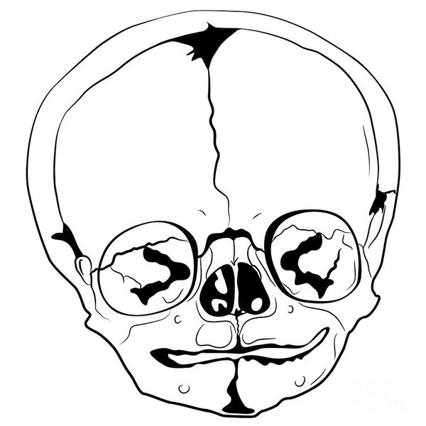 600x600 Human Anatomy Drawings Fine Art America