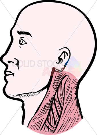 340x470 Stock Illustration Of Old Fashioned Cartoon Drawing Of Human