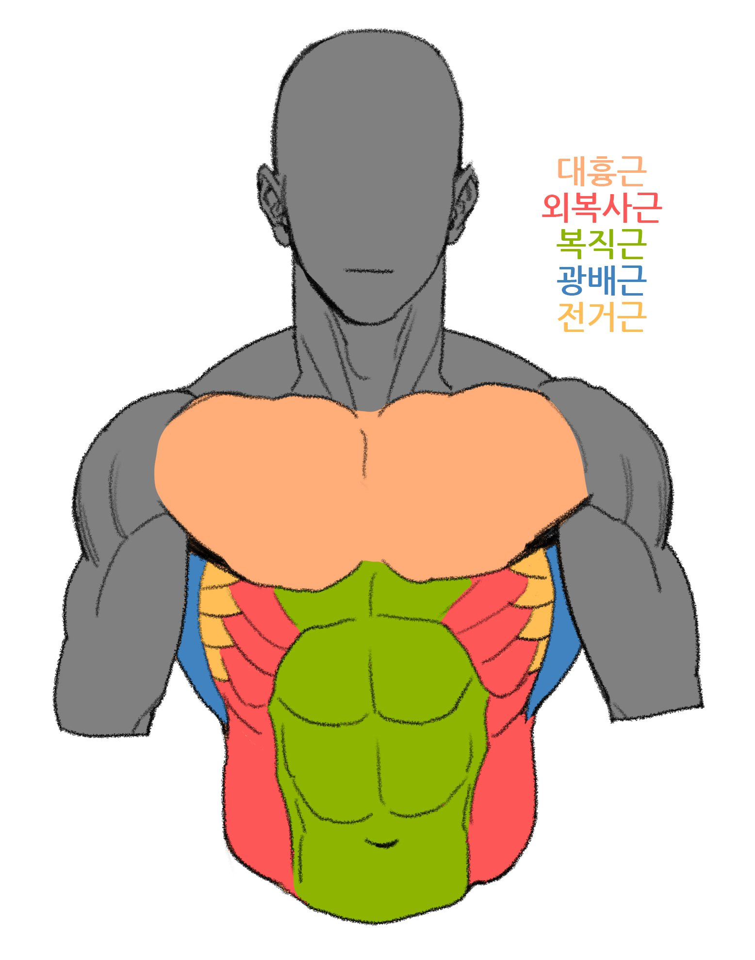 1556x1978 Drawing Bodies Torso And Spine In Anatomy Sketches, Human