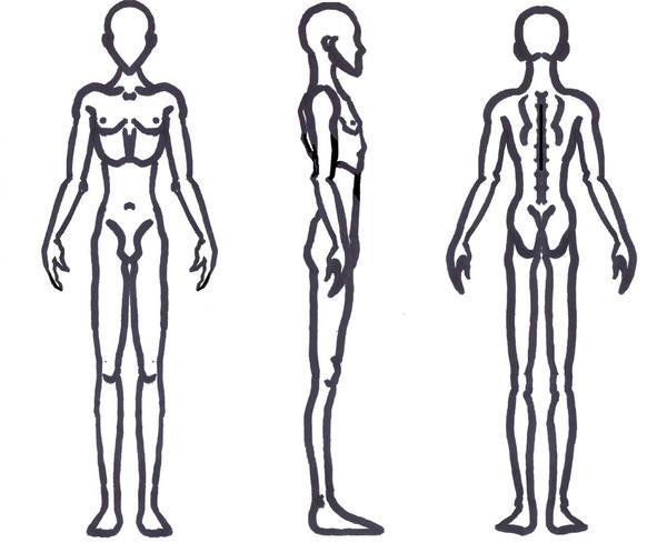 600x489 Male Anatomy