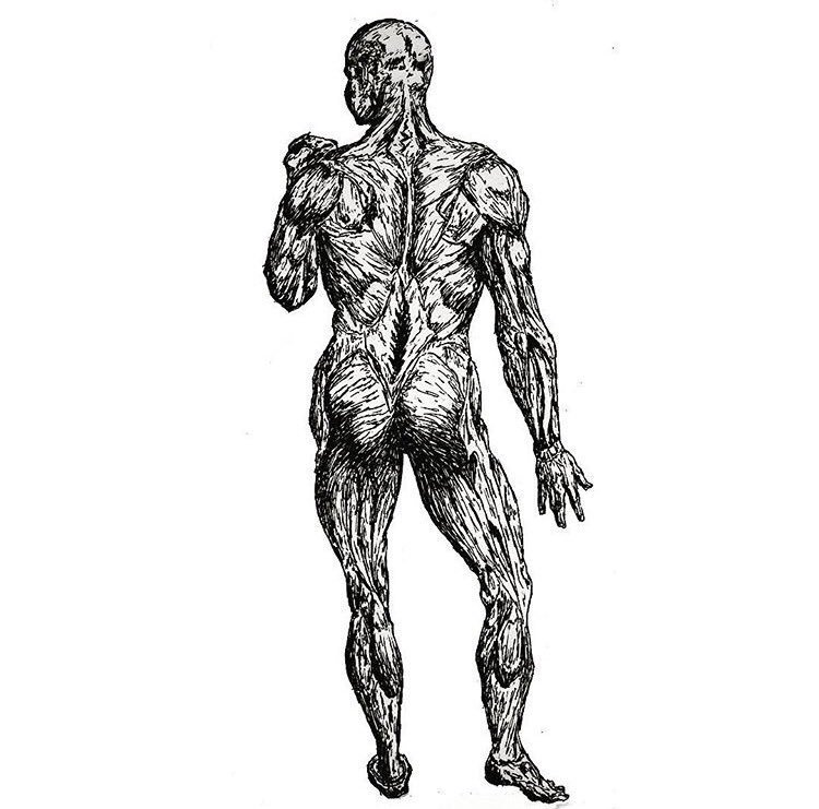750x741 On Twitter The Muscle Anatomy Drawn With A Pilot Pen