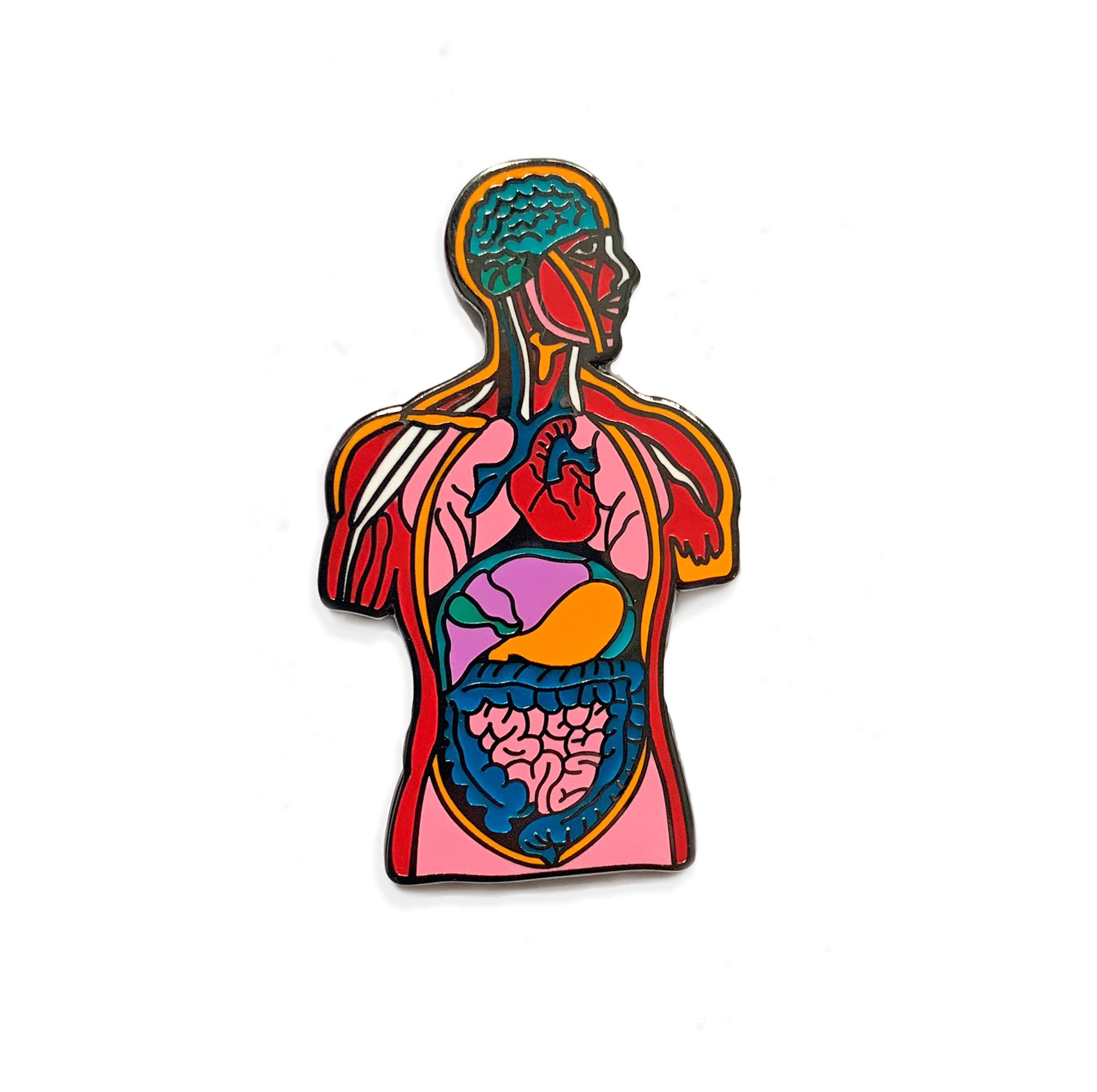 2897x2885 Body Anatomy Pin