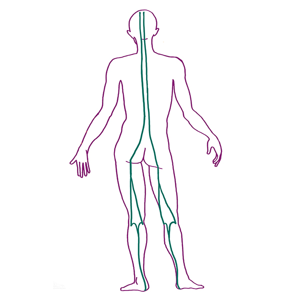 Human Body Line Drawing