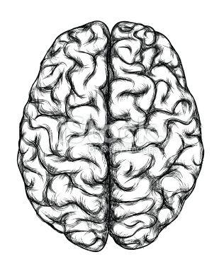 309x380 human brain, top view in imagine brain art, brain
