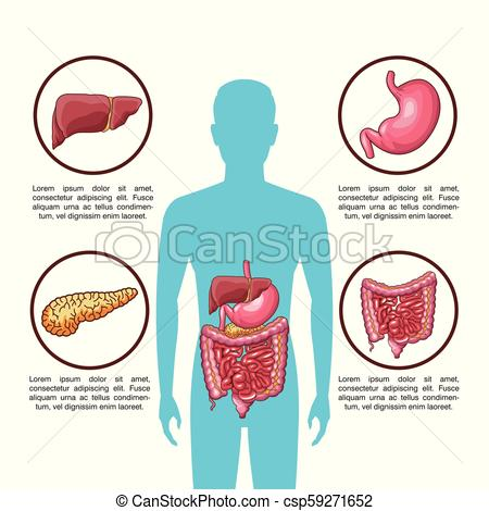 450x470 Digestive System Poster Digestive System Infographic