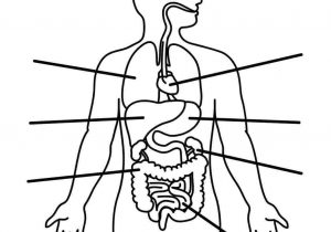 300x210 Outline Of Human Digestive System Collection Of Digestive