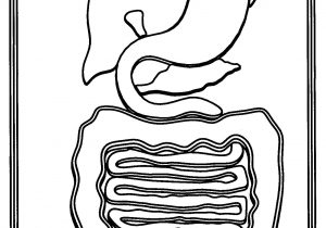 300x210 The Digestive System Drawing How To Draw Human Digestive System