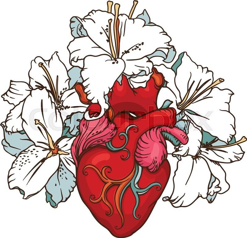800x773 real anatomical human heart drawing prints human heart drawing