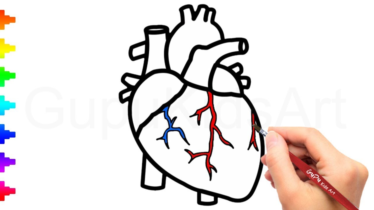 1280x720 human heart drawing and coloring how to draw a human heart